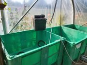 Fisch - Zuchtbecken Transport- Sammelbehälter