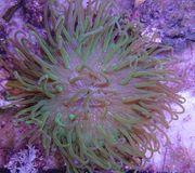 Meerwasser Korallen für Anfänger