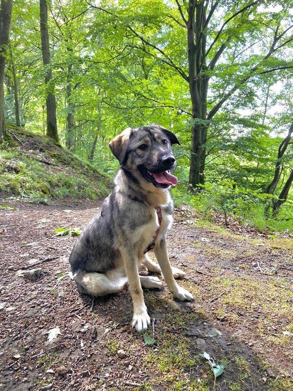 Nala sucht hundeerfahrene Menschen