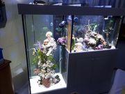 Design Aquarium Aquarienanlage 720 L