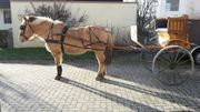 Superschöne Gig für Pferde ab