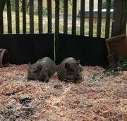 Gnadenhof nimmt wieder Tiere auf