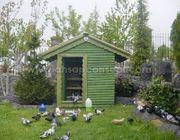 Suche GARTEN Für Haustauben Raum