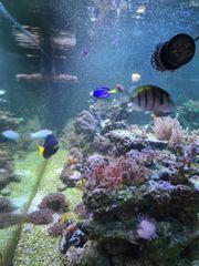 Meerwasser Auflösung Fische