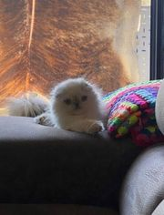 liebevolle Katzen kitten abzugeben