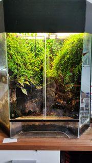 Dendrobates Leucomelas mit Terrarium
