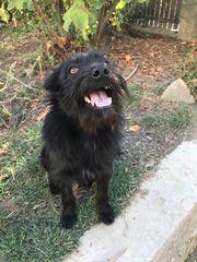 Pippa 1 Jahr alt - wie