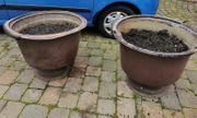 Pflanzenkübel zu verschenken