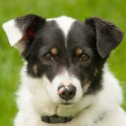 Vilo 9 Jahre - Mischling - Tierhilfe
