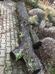 Stamm Birnbaum Holz