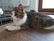 Fabiola Katze aus dem Tierschutz