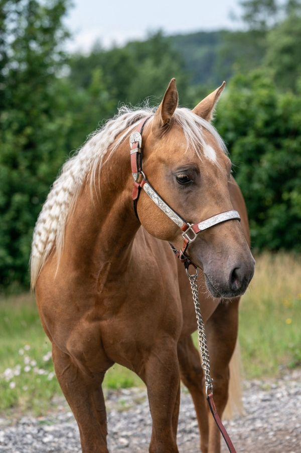 For Sale quarter horse palomino