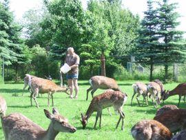 Sika nippon nippon Alpakas und: Kleinanzeigen aus Apolda Heusdorf - Rubrik Nutztiere