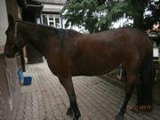Pferd Luna