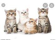 Katze gesucht am besten kitten