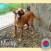 Malsy - Ein ansteckendes Hundegrinsen