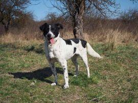 Hunde - VESNA - Begeisterte Wander-Hundefreunde bevorzugt