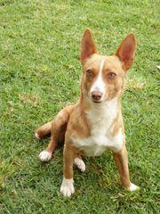 Maurelio kleiner schüchterner Hundemann sucht