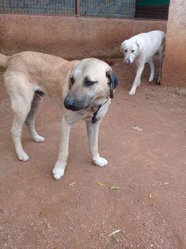 Tierheim Hunde In Bad Munstereifel Tiermarkt Tiere Kaufen Quoka De