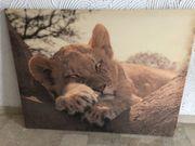 Leinwandbild schlafendes Löwenbaby 117 x