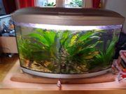 Cayman Ferplast 150 Liter Aquarium