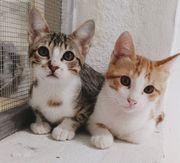 Poni und Potro zwei hübsche