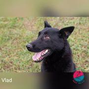 Vlad - Schwarze Schönheit sucht konsequente