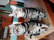 Wunderschöne Katzenmädels