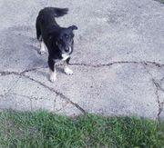 Anfängerhund Jack 3 Jahre lieb
