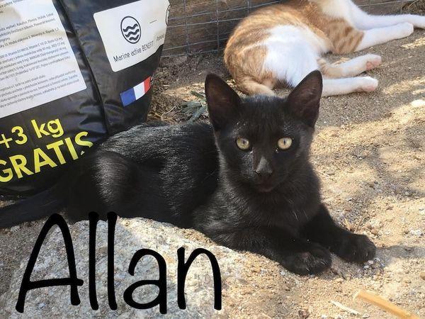 Allan verspielter Kater ca 4