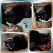 Wunderschöner schwarzer Kater Moritz 10