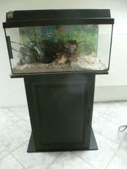 gebrauchtes Aquarium ca 60 ltr