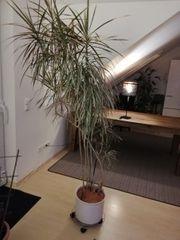 Pflanze - super gewachsen