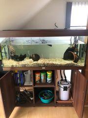 2 Wasserschildkröten samt 250 Liter