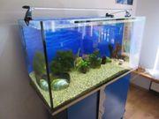Aquarium mit Zubehör