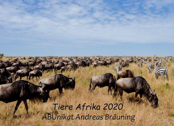 Jahreskalender 2020 Tiere Afrika