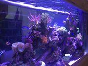 Biete 250 l Meerwasser Aquarium