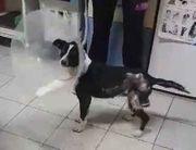 Anuk ist wieder gesund - Tierpension