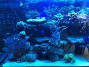 Lebendgestein Riffgestein Meerwasser Aquarium