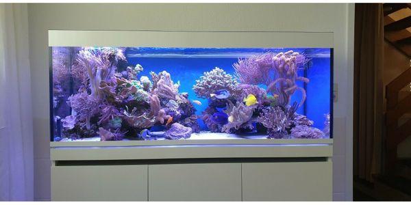 Meerwasseraquarium EHEIM Inspiria Marine mit