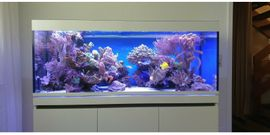 Meerwasseraquarium EHEIM Inspiria Marine, mit Hydrid LED 2.Jahre alt, Weißglas
