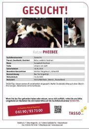 Katze Pheebee schmerzlich vermisst