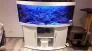 Meerwasser Aquarium 450L Panorama