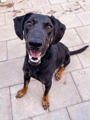 Hübscher Hundebub Hugo