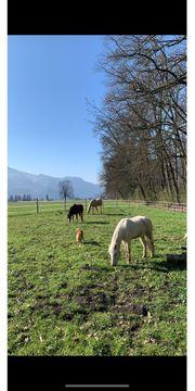 vorübergehender Einstellplatz Paddockbox Auslauf Pony