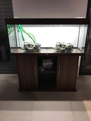 Aquarium Juwel Rio 240 dunkelbraun