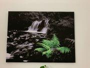 Bild schwarz weiß grün