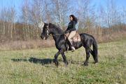 Reitbeteiligungen Reiter sucht Pferd