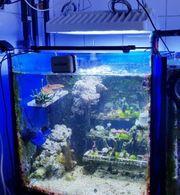 LED Philips Coralcare Meerwasser Aquarium