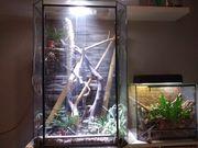 Taggeckos mit terrarien und Zubehör